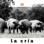 2ºBLOG_JUNIO_MAGUISA