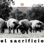 2ºBLOG_JULIO_MAGUISA