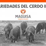 Las variedades del cerdo ibérico