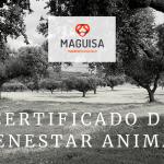 4ºBLOG_SEP_MAGUISA