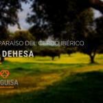 2ºBLOG_DIC_MAGUISA